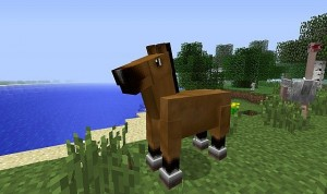 cavalo_ap